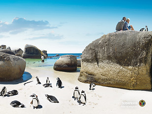pinguine-wallpaper